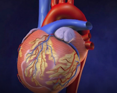 Blausen Medical   Medical Animations